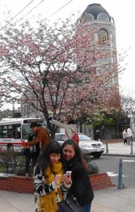 0512sakura2.jpg