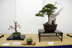 bonsai-kyouiku.jpg