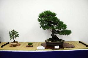 bonsai-shityo.jpg