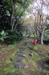 nakanosyokubutsu2.jpg