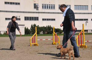 dogtraining2.jpg
