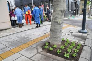 flowerstreet6.jpg
