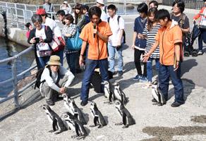 aqua-penguin.jpg