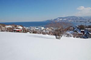 hauchikaede-winter.JPG