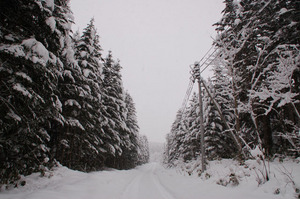 snow201012-forest.JPG