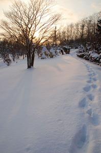 wintertemiyapark2010-asiato.JPG