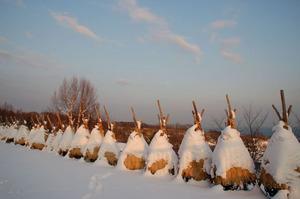 wintertemiyapark2010-yukigakoi.JPG